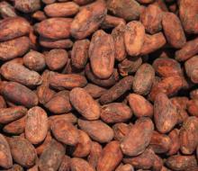 Natural Organic Cocoa Beans