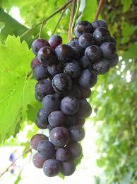 FRESH RED GRAPES FRUITS