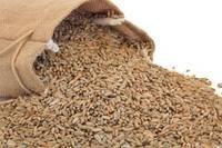 Rye Dried