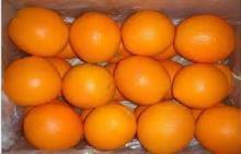 Grade A Fresh Oranges (Navel, Valencia etc)