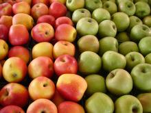 NEW : Fruit Fresh Fuji Apple/Fresh Apples