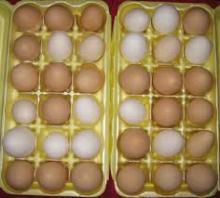 Eggs Ready*,