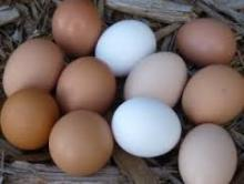 FRESH BROWN POULTRY EGGS%