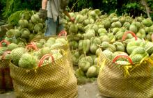Durian fresh fruit