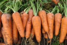 Taiwanese carrot with pesticide residual safe