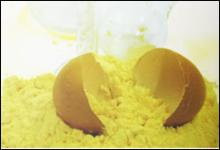 Exporters of Whole Egg Powder