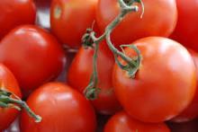 Quality Fresh Tomates