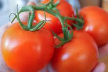 Fresh cherry tomato, die Kirschtomate flavor for juice, sour milk beverage