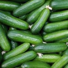 Fresh cucumber vegetable