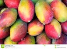 Fresh Mangoes fruits