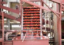 Tomato Sorter and others