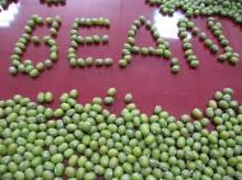 Nice Green Mung Beans High Quality Different Size