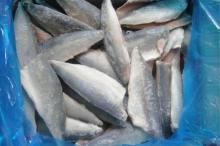 Pacific Makcerel Fillet
