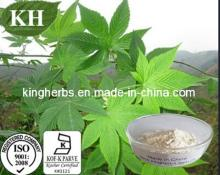 High Quality Natural Sweetener Sweet Tea  Extract   Rubusoside s 75 % Min by HPLC