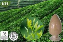 Green Tea Extract Tea Polyphenols 10%-98%,EGCG 10%-80%
