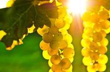 Wine distillate