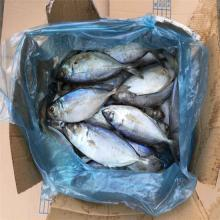 Frozen WR  big   eye   scad  from China