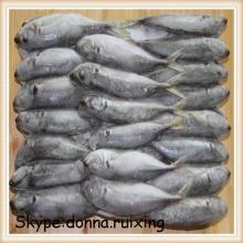 big eyes scad (trachurus japonicus)big eyes horse mackerel