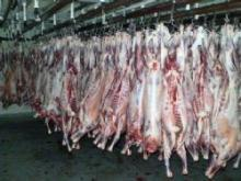 Top quality Australian Halal Lamb, Mutton and Goat meat. Chilled or frozen. Whole carcasses or 6 cut