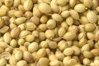 Quality Coriander Seeds
