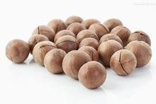 Macadamia nuts fro sale