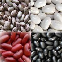 2015 White/Black Light Speckled Kidney Beans (LSKB) Pinto Beans/Sugar Beans Best Price