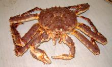 Red King Crab, Blue King Crab