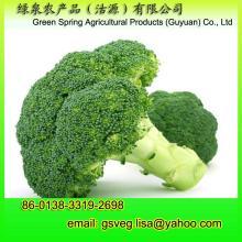 Export Fresh Broccoli