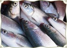 Trevally fish frenzen for sale