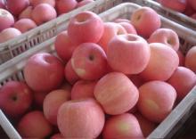 Fuji Apple and Royal Gala Apple