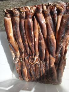 Frozen Argentina Illex Squid Whole Round