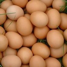 fresh white and brown chicken table eggs from Brazil for sale