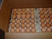 fresh eggs exporters
