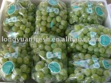 Fresh Victoria Green Grapes from China new crop