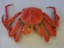 Live and Frozen king crab for Sale