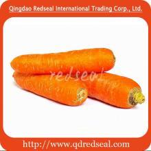 2015 Fresh Carrot