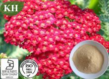 Natural Achillea millefolium Extract: 5:1; 10:1.