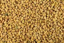 Best Quality Fenugreek Seed Sortex Cleaned