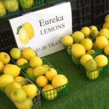 FRESH EUREKA LEMONS AND LIMES