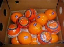 New Year 2015 Special Offer - Fresh Oranges/ Mandarin