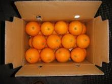 2015 new crop fresh valencia oranges for sale