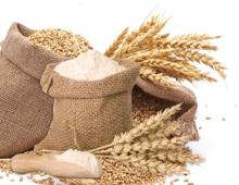 Milling wheat / Durum wheat / Wheat Flour