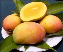 100% Natural Mango Powder/ Instant Mango Juice Powder/ Spray Dried Mango Powder