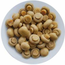 New crop canned mushroom in tin