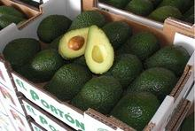 Avocado with the best price and good quality from Brazil