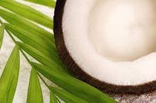 2015 Brazilian fresh coconut with good quality and best price