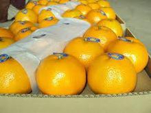 Citrus fruit from Brazil