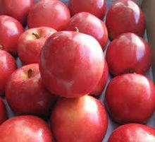 Class A fresh red Star Apple