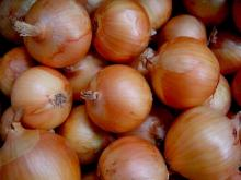 Fresh red and yellow onion exporters in turkey