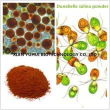 Salt Algae Extract,dunaliella salina powder, dunaliella salina extract